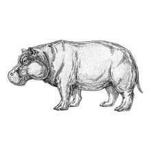 Zoo. African Fauna. Hand Drawn...