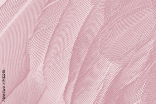 Photo sur Toile Les Textures Beautiful Caral Blush violet vintage color trends feather texture background