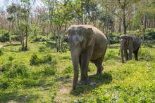 Elephant Enjoying Their Retire...