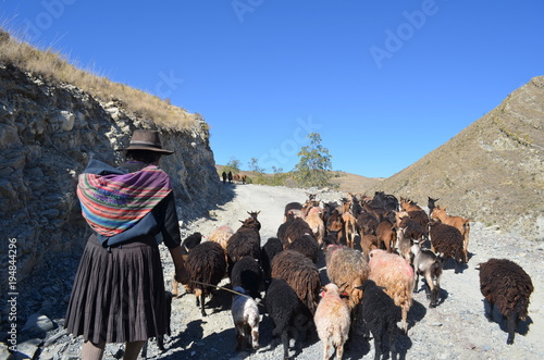 Bolivian woman with goats in the mountains Canvas Print