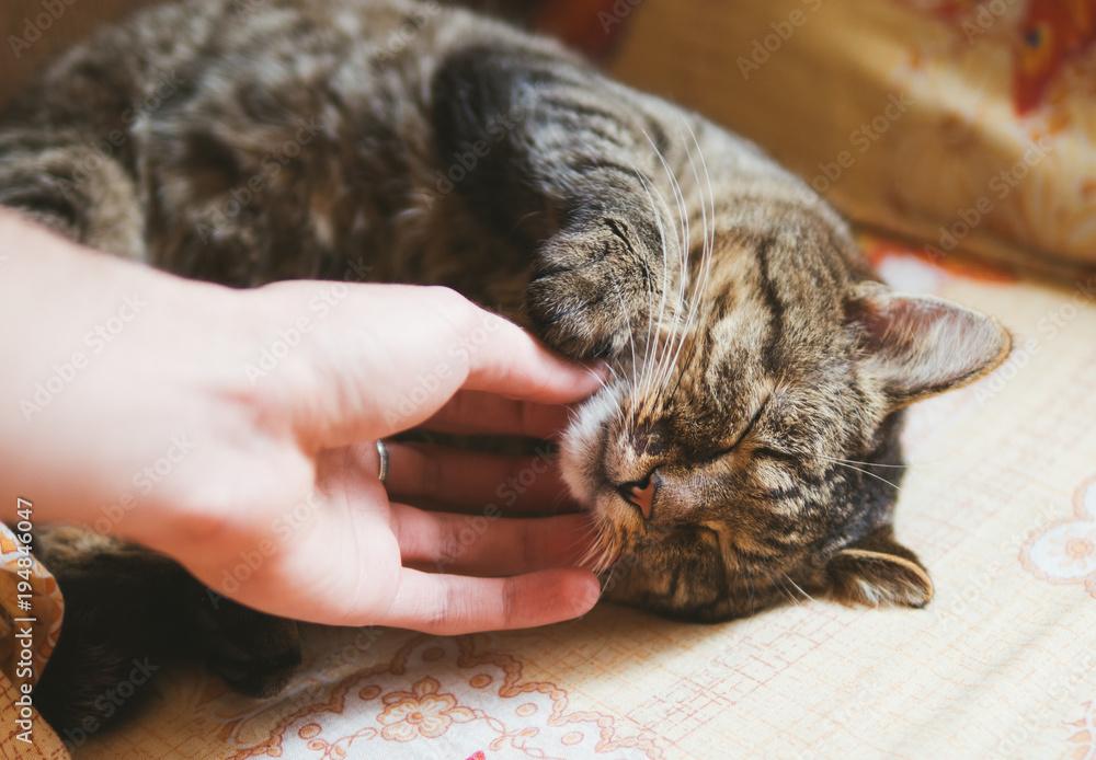 Fototapeta Cute cat sleeping on the bed