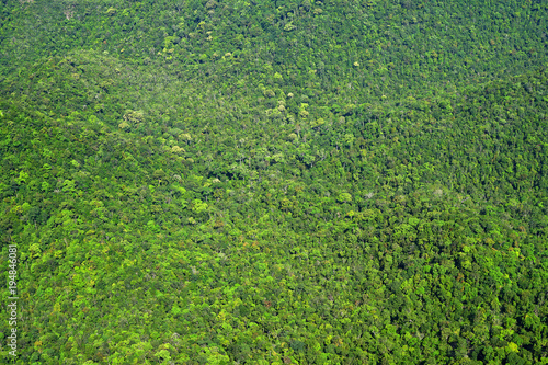 Foto op Plexiglas Groene Tropical forest of Langkawi, Malaysia, Asia