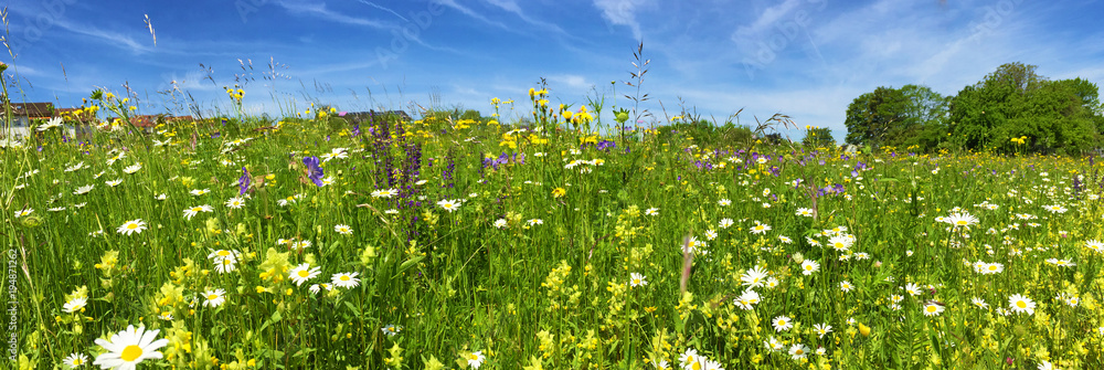 Fototapety, obrazy: Wiese mit bunten Blumen