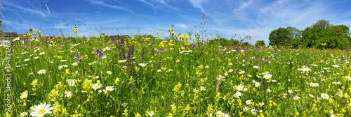 Tuinposter Natuur Wiese mit bunten Blumen