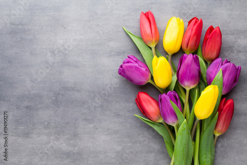 Foto op Plexiglas Tulp Multicolored spring flowers, tulip on a gray background.