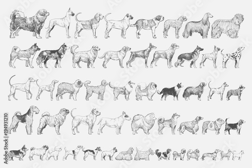 Canvas Print Illustration drawing style of dog