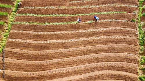 Farmer working on the red onion terraced field