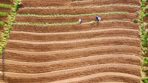 Farmer working on the red onion terraced field
