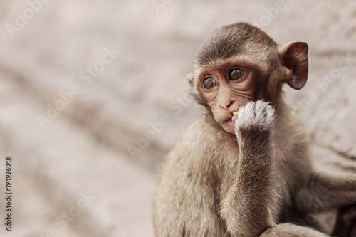 In de dag monkey in a nice position.
