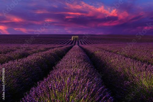 Montage in der Fensternische Violett Lavender field with sunset