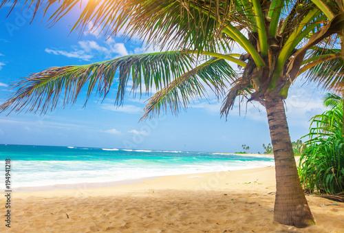 Foto op Plexiglas Indonesië panoramic tropical beach with coconut palm