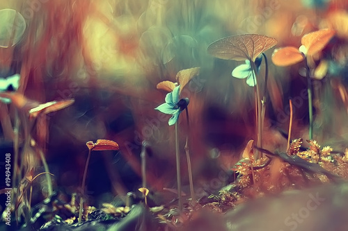 Photo Stands Macro photography moss macro spring / natural spring background with rays of sun moss nature