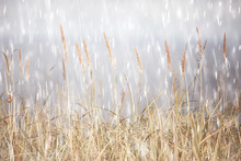 Rain Background / Autumn Background Textures Of Rain On Field With Dry Grass, Walk In Bad Windy Weather, Blurred Background Of Bad Weather