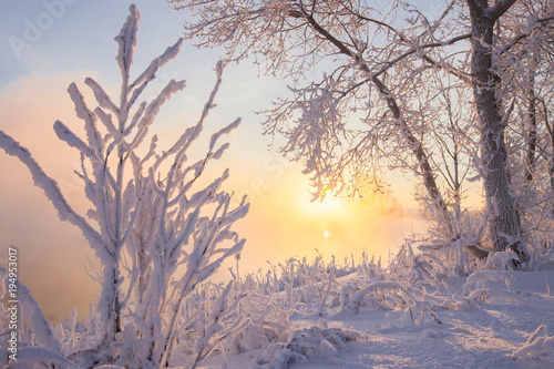 Winter landscape - frosty trees in the snowy forest.
