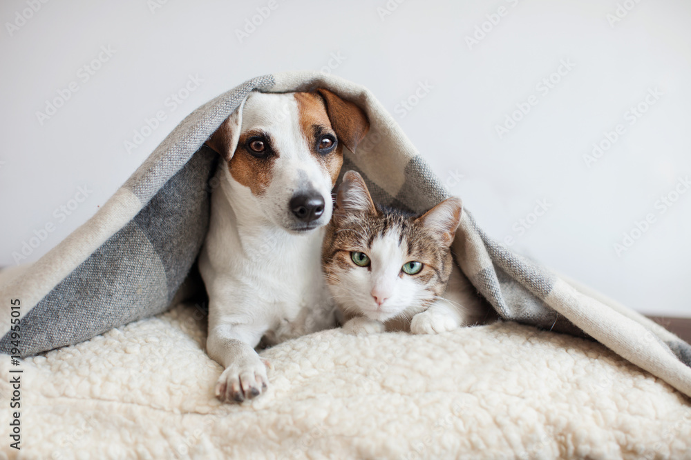 Fototapety, obrazy: Dog and cat together