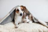 Fototapeta Zwierzęta - Dog and cat together