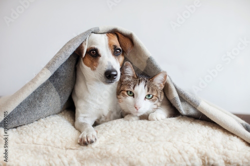 Poster de jardin Chat Dog and cat together