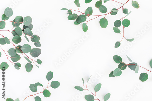 Eucalyptus leaves on white background. Frame made of eucalyptus branches. Flat lay, top view, copy space