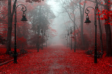 Beautiful Autumn In Red Colors