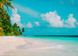 tropical sand beach with palm trees