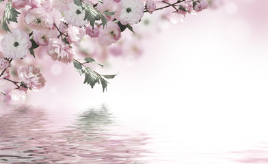 Fototapeta Do kawiarni Flowers background with amazing spring sakura with butterflies. Flowers of cherries.