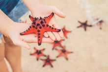 Red Starfish In The Hands, Nex...