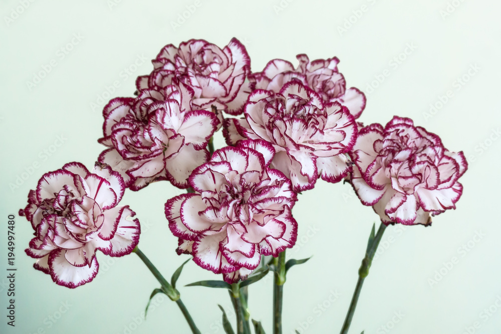 810bc8d31 Photo & Art Print White and red dianthus caryophyllus bouquet | UKposters