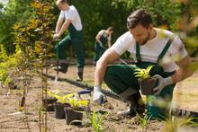 Creating A Beautiful Garden Fr...