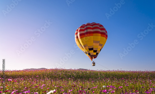 Tuinposter Ballon colorful hot air balloon flying on beautyful cosmos field