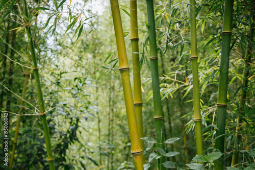 In de dag Bamboo bamboo forest