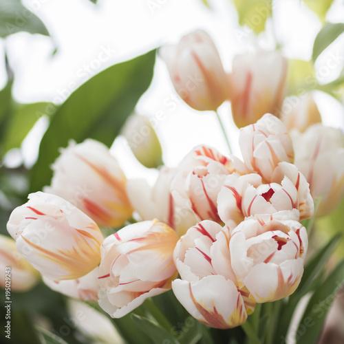 Foto op Canvas Azalea Bouquet of fresh tulips in jug
