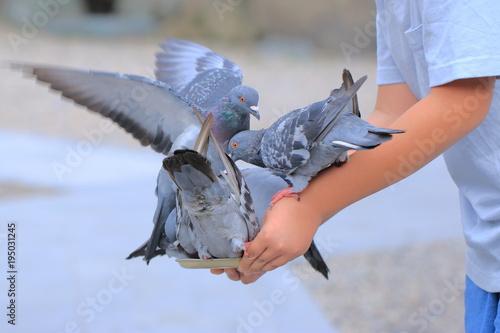 Staande foto Struisvogel 鳩に餌