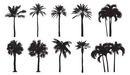 Tropska kokosova palma, različite prirodne sorte drveća. Skup vektorskih ilustracija. Savršene realne crne siluete izolirane na bijeloj pozadini.