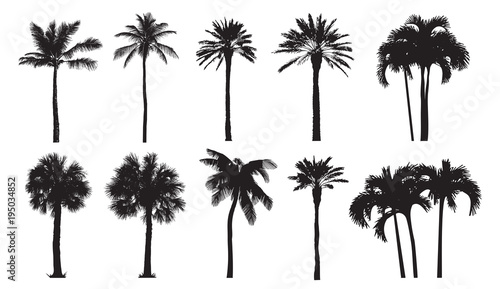 Tropical coconut palm, different natural varieties of trees Fototapeta