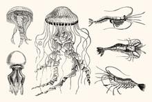 Vintage Jellyfish And Shrimp N...