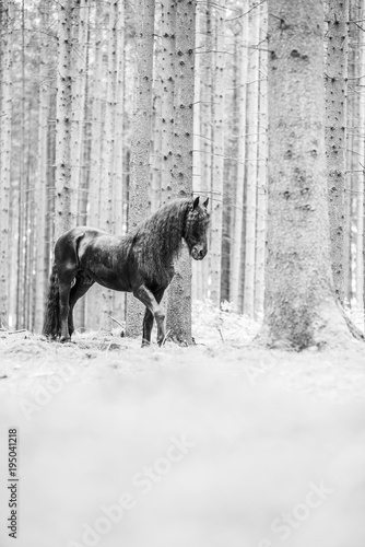 Friese Pferd Im Wald Buy This Stock Photo And Explore Similar