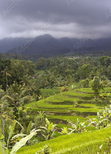 view of rice terraces in cloudy day. Indonesia. Bali.