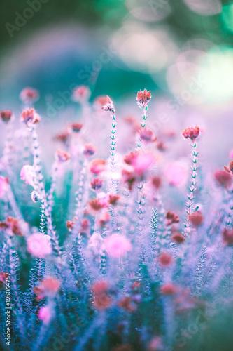 widok-na-wiosne-lakowe-rozowe-kwiaty