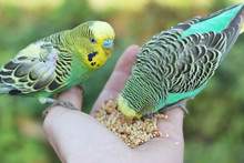 Feeding Birds From Hand