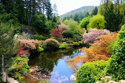 Aluminium Prints Garden Butchart Gardens, Victoria, Canada. View over a pond in the sunken garden with vibrant spring flowers.
