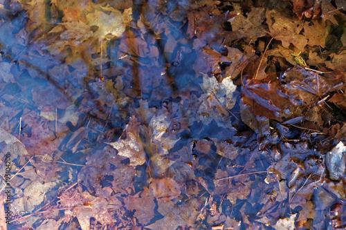 Photo sur Toile Les Textures Forgotten foliage