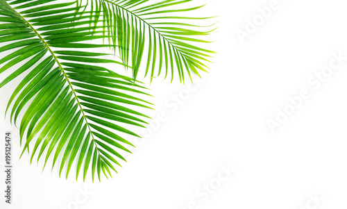 Foto op Plexiglas Palm boom GReen leaves palm isolated on white background.