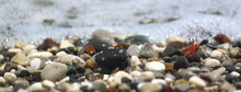 Pebbles By Sea On Beach, For Banner And Texture. Focus Runs Through The Middle