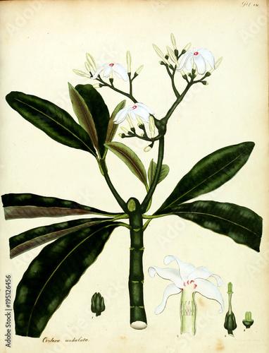 Fototapety, obrazy: Illustration of flower.
