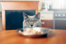 Cat Is Looking At Food, Cat Wa...