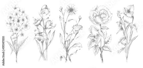 Valokuvatapetti Handsketched Plant and Flower Illustrations - Pencil Graphite Sketches of Flower