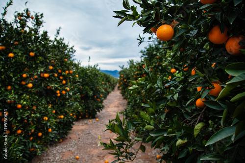 Naranja Tapéta, Fotótapéta