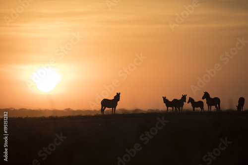 Photo  African landscape while in safari