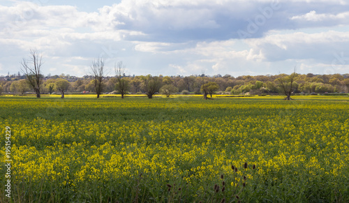 Photo Essex countryside in Spring