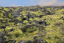 Lava Stones Covered With Moss,...